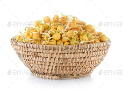 Pea sprouts in basket