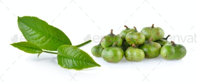 green tea leaf and tea seeds isolated on white background