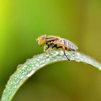 insect fly on on green leaf