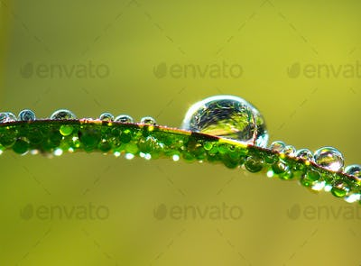 water drops on leaves in moring