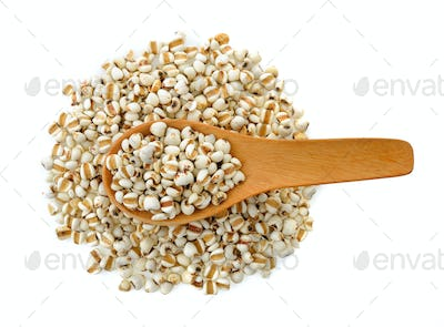 Millet in wood spoon isolated on white background