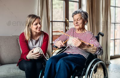An elderly grandmother in wheelchair with an adult granddaughter knitting at home.