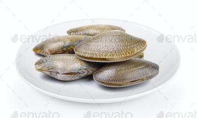 Surf clamplate on white background