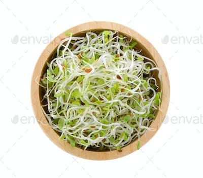 Alfalfa Sprout in a bowl on white background