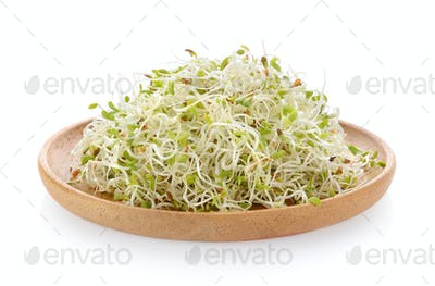 Alfalfa Sprout in wood plate on white background