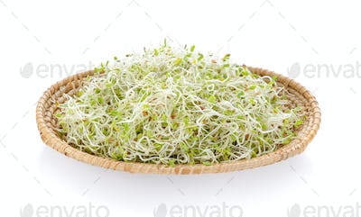 Alfalfa Sprout in a basket on white background