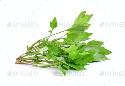 mugwort on white background