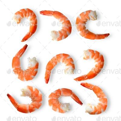 set of shrimps on a white background