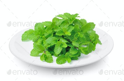 mint in plate on white background