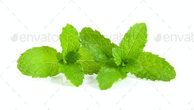 mint leafs isolated on white background