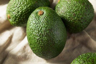 Raw Green Organic Unripe Avocados