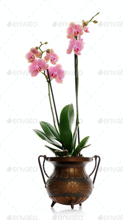 pot with pink orchid