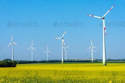 Flowering field of rapeseed with wind energy plants