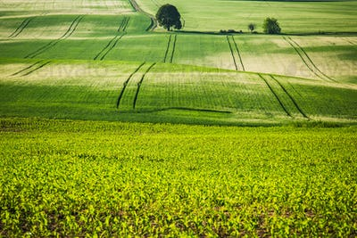 Rolling green fields, coutryside.