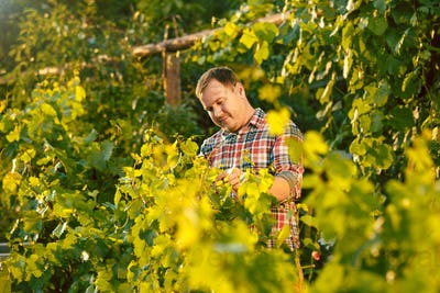 Mant prune grape brunch, work on a family farm