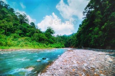 Mountain river and dense jungle. Sumatra, Indonesia.