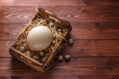 Big ostrich egg on straw surround by quail eggs, copyspace
