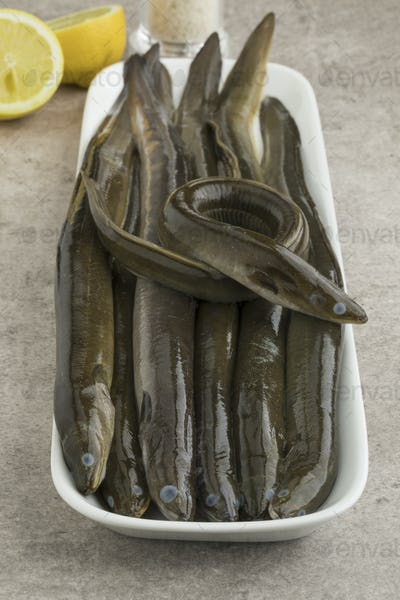Plate with fresh raw eels