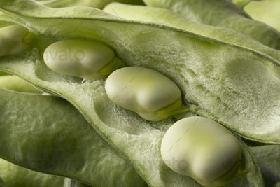 Fresh raw broad beans inside the pod