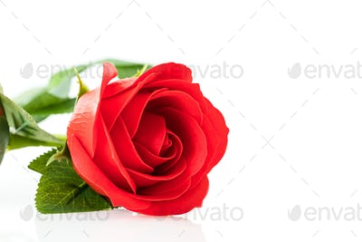 Single Red plastic fake roses on white_-7