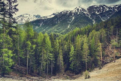 High mountains with snow and wild forest