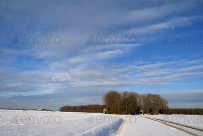 Winter landscape in the Biesbosch