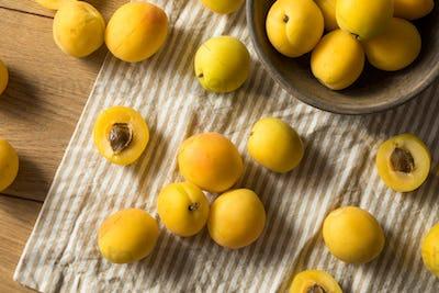 Raw Yellow Organic Angelcot Apricots