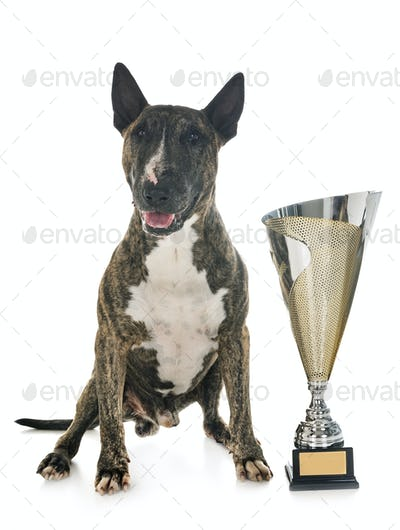 bull terrier and cup