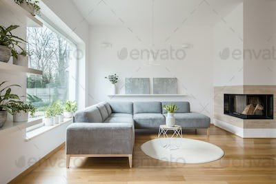 Grey corner lounge standing in white living room interior with t