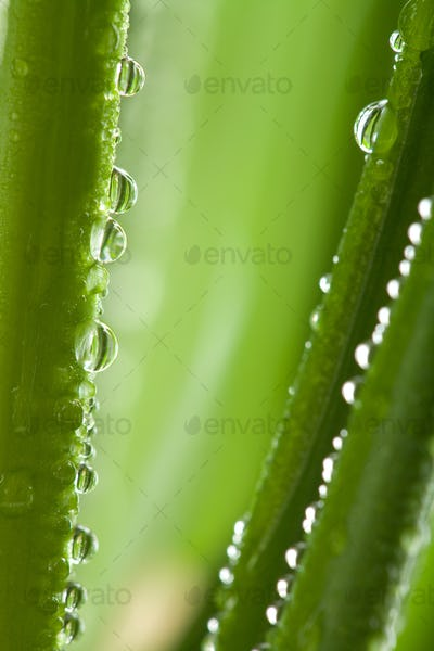 fresh wet grass background