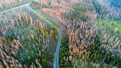 Aerial view of a country road between forest