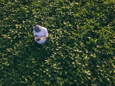 Farmer agronomist using drone to observe soybean field
