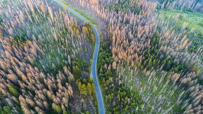 Aerial view of a country road in the forest