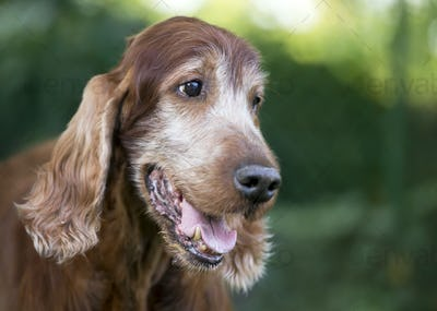 Beautiful cute old dog smiling