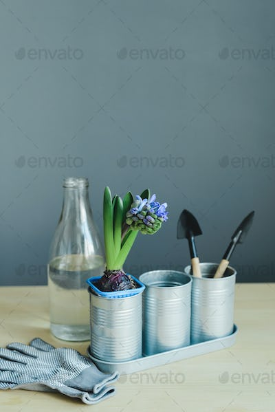 hyacinth mix plant, gardening tools, gloves and glass bottle