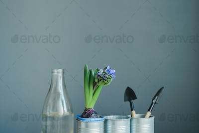 hyacinth mix plant, gardening tools and glass bottle