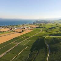 Aerial of Vineyard fields between Lausanne and Geneva in Switzer