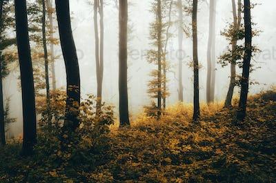 Enchanted autumn woods with orange leaves