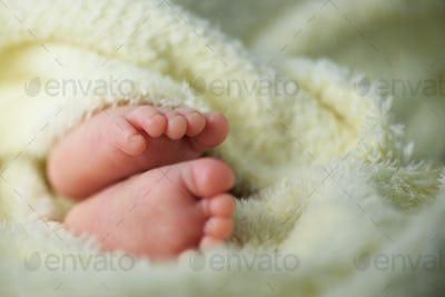 Newborn baby feet in a fluffy blanket