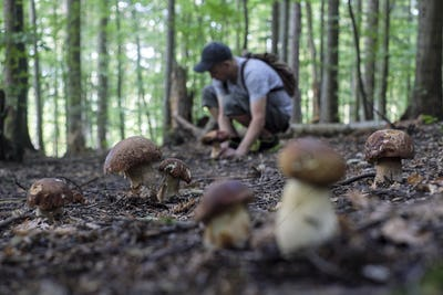 Man collect mushrooms