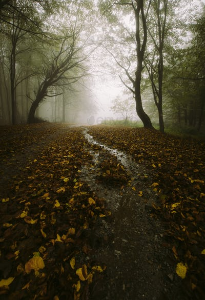 Enchanted forest road in autumn