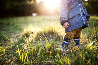 A little toddler boy standing outdoors on a meadow at sunset. Rear view.