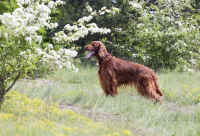Beautiful happy dog standing in the grass