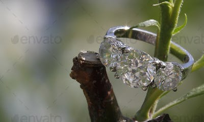 Wedding gem ring nested within a tree branch