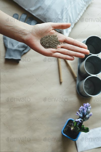 womans hand holds parsley seed