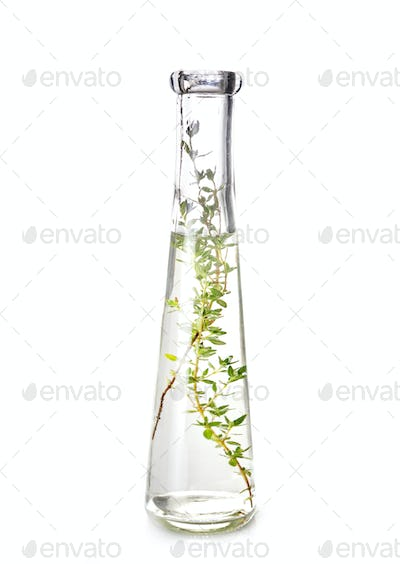 thyme in test tube