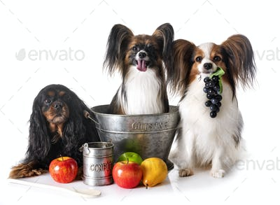 little dogs cooking