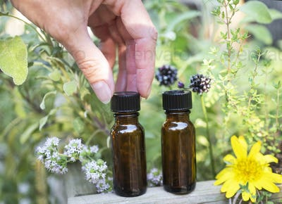 essential oils and plants
