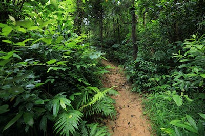 Asian tropical forest after rain