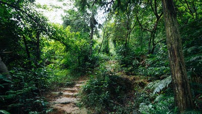 Trail in asian tropical forest after rain